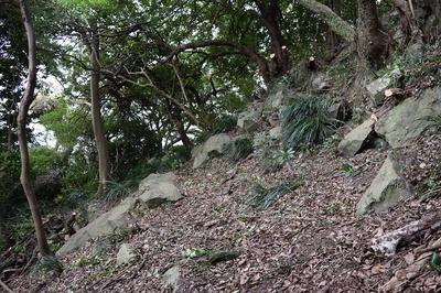 木々の伐採後2.jpg