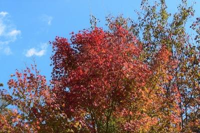 木々の秋色.jpg
