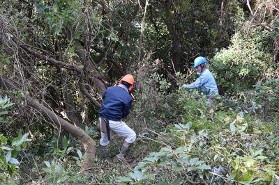 木の伐採3.jpg