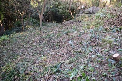 木の伐採後2.jpg