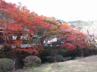 本堂近くの紅葉.jpg