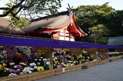 本殿と西日本菊花大会作品1.jpg