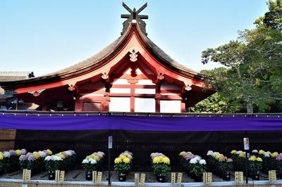 本殿と西日本菊花大会作品2.jpg