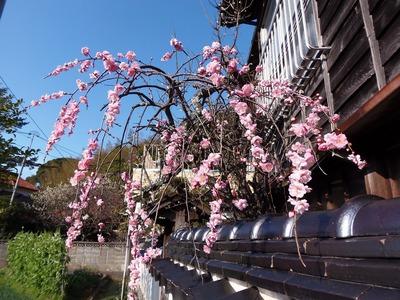 村井さんの季節の花.jpg