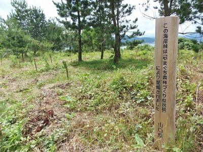 松の植樹1.jpg