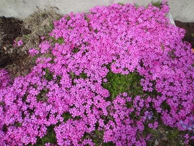 松本さんの花.jpg