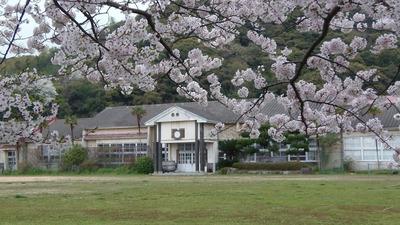 校舎と桜.jpg