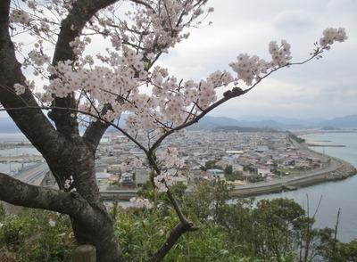 桜と仙崎の町並み2.jpg