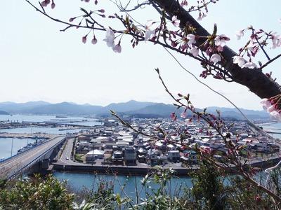 桜と仙崎市街地.jpg