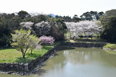 桜と内堀.jpg