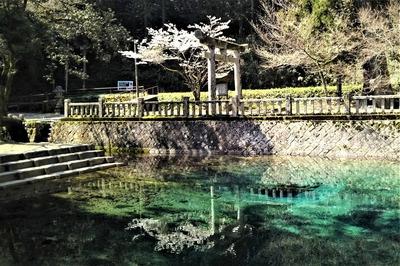桜と弁天池.jpg