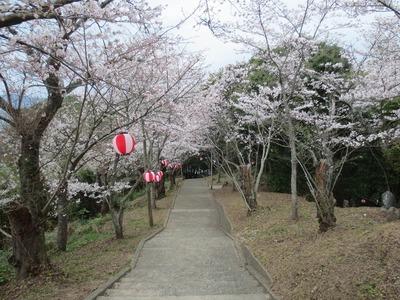 桜と階段.jpg