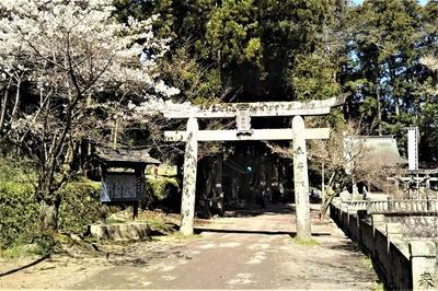 桜と鳥居1.jpg