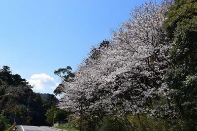 桜の園.jpg