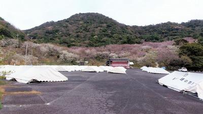 桜まつり会場3.jpg