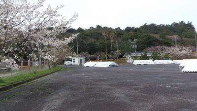 桜まつり会場5.jpg