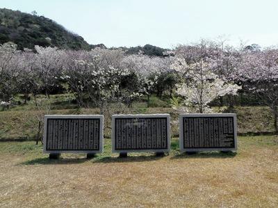 桜オーナー碑.jpg