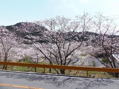 桜花爛漫4.jpg