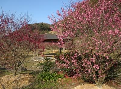 梅と東屋2.jpg