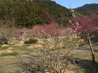 梅と東屋3.jpg
