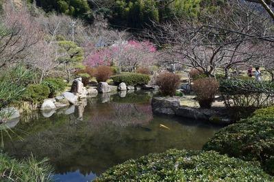 梅林園の池.jpg