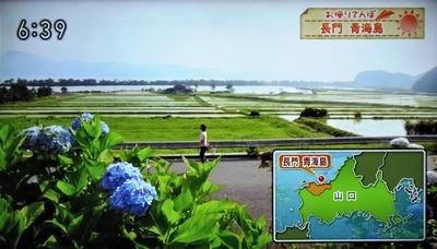 棚田・青海湖・波の橋立.jpg