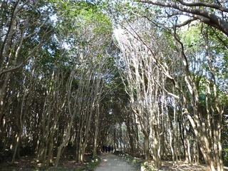 椿林の遊歩道.jpg