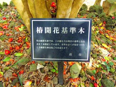 椿開花基準木プレート.jpg