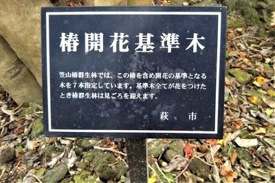 椿開花基準木説明.jpg