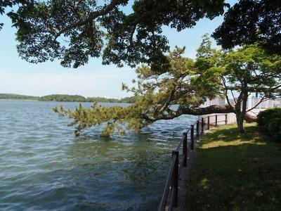 横松と湖2.jpg