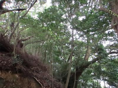樹叢1.jpg