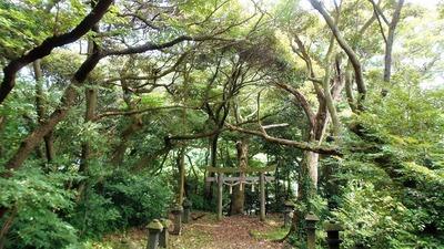 樹叢2.jpg