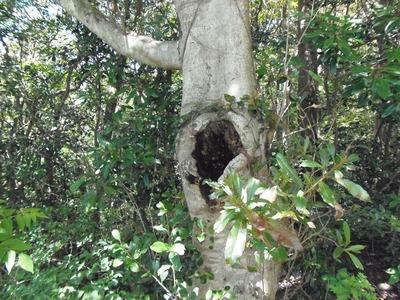 樹木にキツツキの穴.jpg