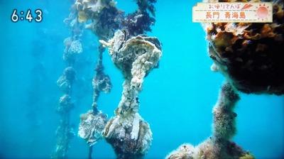 水中の岩がき1.jpg
