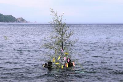水中へ3.jpg