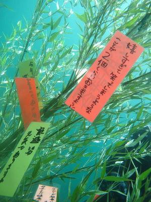 水中七夕3.jpg