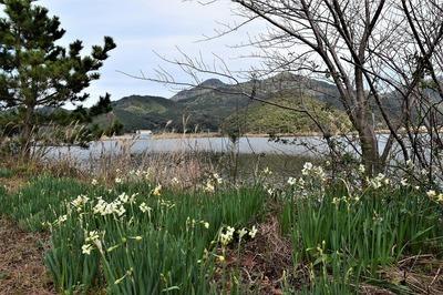 水仙と高山.jpg