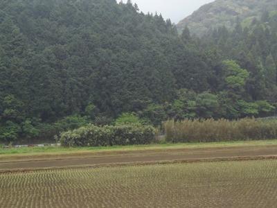 水田1.jpg