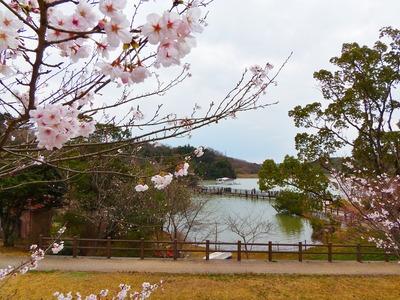江汐湖の桜.jpg