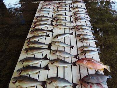 沢山のお魚.jpg