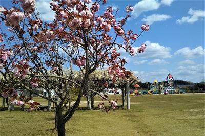 河原谷公園2.jpg