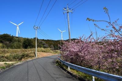 河津桜と風車1.jpg