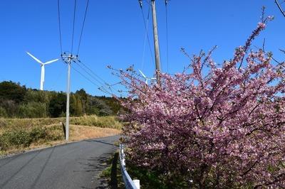 河津桜と風車2.jpg