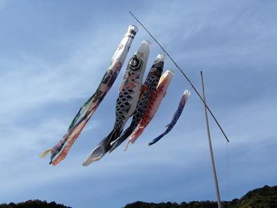 河野さんの鯉のぼり2.jpg