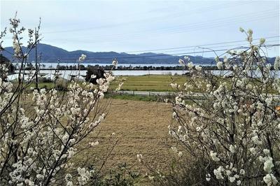 波の橋立と季節の花1.jpg