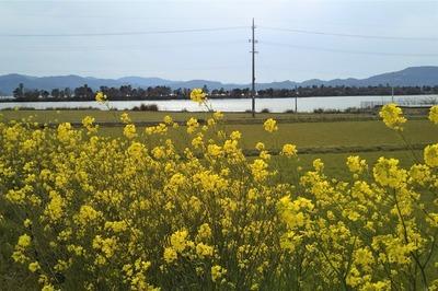 波の橋立と御青海湖と季節の花1.jpg