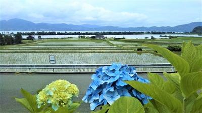 波の橋立と棚田と紫陽花1.jpg