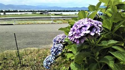 波の橋立と棚田と紫陽花3.jpg