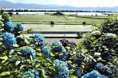 波の橋立・青海湖と季節の花.jpg