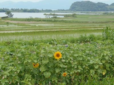 波の橋立・青海湖・ひまわり.jpg